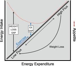 argumentative essay Physical Education Obesity